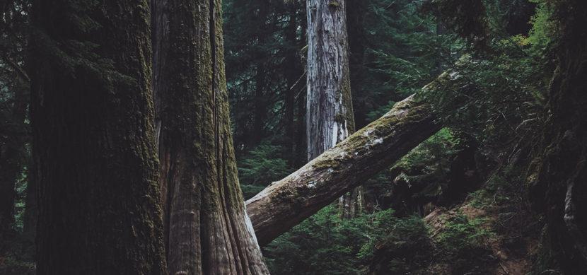 Jeff Finley, fallen tree